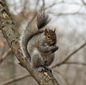 Big, fat squirrel is smarter than you.