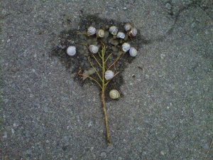 A bunch of snails form a gestalt organism dedicated to kicking our asses. Or maybe it was just book club.