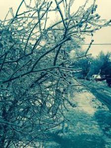 ice storm frozen tree
