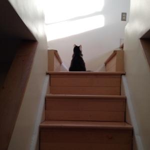 Columbo solitary